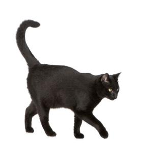 20080917_black_cat.jpg
